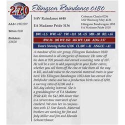 ELLINGSON RAINDANCE 0180