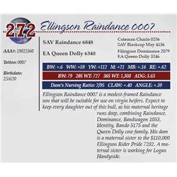 ELLINGSON RAINDANCE 0007