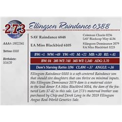 ELLINGSON RAINDANCE 0388