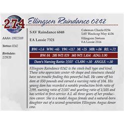 ELLINGSON RAINDANCE 0242