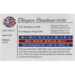 ELLINGSON RAINDANCE 0060