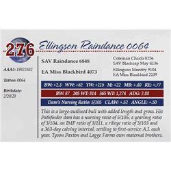 ELLINGSON RAINDANCE 0064