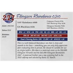 ELLINGSON RAINDANCE 0310