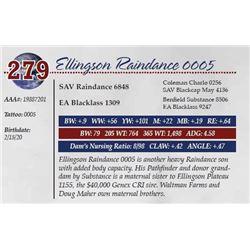 ELLINGSON RAINDANCE 0005