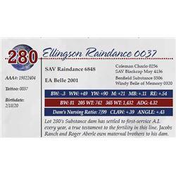 ELLINGSON RAINDANCE 0037