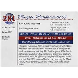 ELLINGSON RAINDANCE 0067