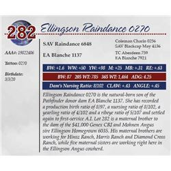 ELLINGSON RAINDANCE 0270