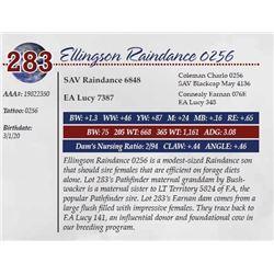 ELLINGSON RAINDANCE 0256