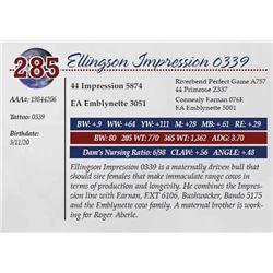 ELLINGSON IMPRESSION 0339