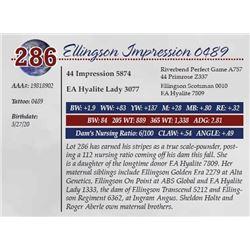 ELLINGSON IMPRESSION 0489