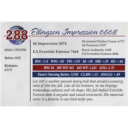 ELLINGSON IMPRESSION 0608