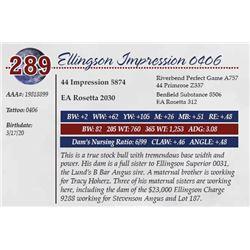 ELLINGSON IMPRESSION 0406
