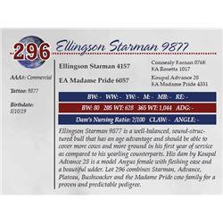 ELLINGSON STARMAN 9877