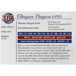 ELLINGSON NIAGARA 0493