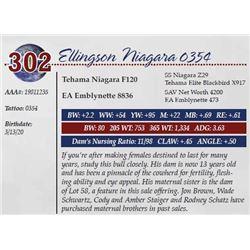 ELLINGSON NIAGARA 0354