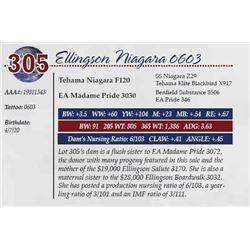 ELLINGSON NIAGARA 0603