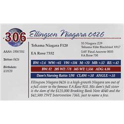 ELLINGSON NIAGARA 0426