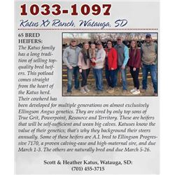 1033-1097 - 65 BRED HEIFERS