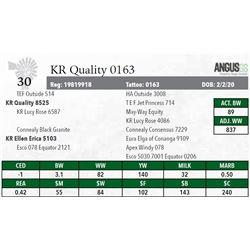 KR QUALITY 0163