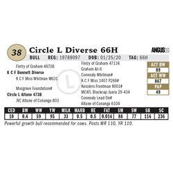 Circle L Diverse 66H