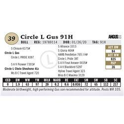 Circle L Gus 91H