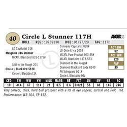Circle L Stunner 117H