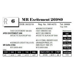 MR Excitement 26989