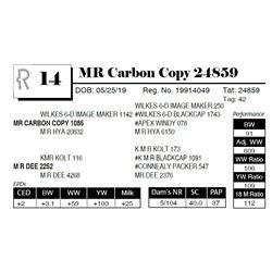 MR Carbon Copy 24859
