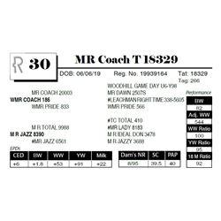 MR Coach T 18329