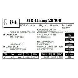 MR Champ 29369