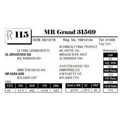 MR Grand 31569