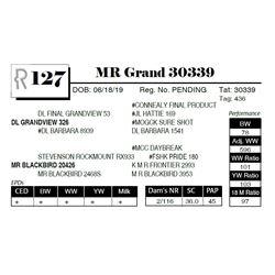 MR Grand 30339