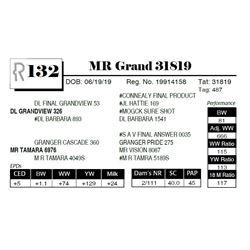 MR Grand 31819