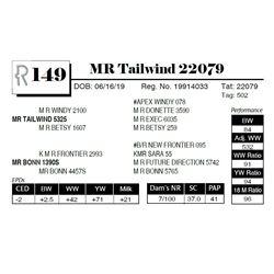 MR Tailwind 22079