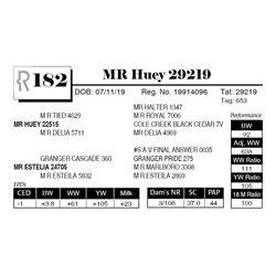 MR Huey 29219