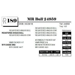 MR Bull 24959