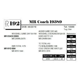 MR Coach 19389