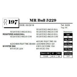 MR Bull 5229