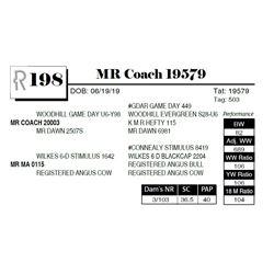 MR Coach 19579