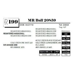 MR Bull 20859