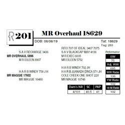 MR Overhaul 18629