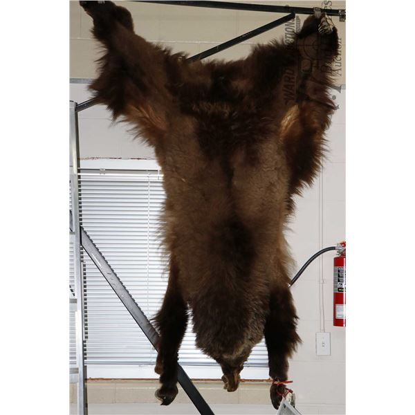 """Kodiak Island brown bear hide  64""""  tail to nose, includes clearance documentation"""
