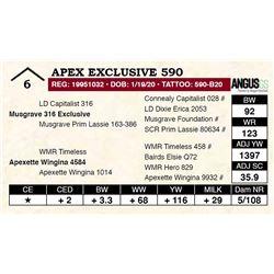 Apex Exclusive 590