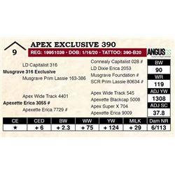 Apex Exclusive 390