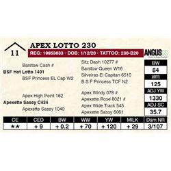 Apex Lotto 230