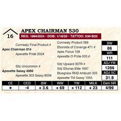 Apex Chairman 530