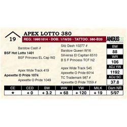 Apex Lotto 380