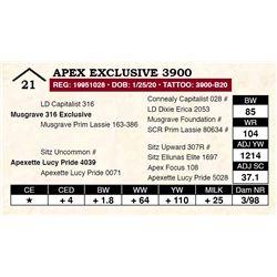 Apex Exclusive 3900
