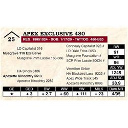 Apex Exclusive 480