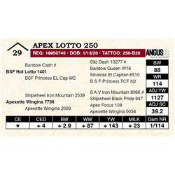 Apex Lotto 250
